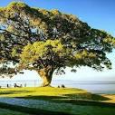 imagem de São Lourenço do Sul Rio Grande do Sul n-7