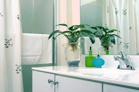 Good Plants For Windowless Bathroom by Best Houseplants To Filter Toxins In Your Bathroom Mom Foodie