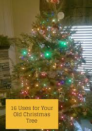 Are Christmas Trees Poisonous To Dogs by The Rural Economist U0026 Bringing Rural Back Podcast 16 Uses For
