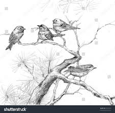 Pencil drawing of four sparrows on branches of a pine tree