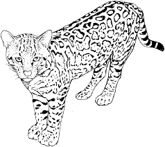 Cat Coloring Pages Cats Kitten