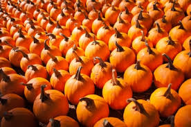 Best Pumpkin Patches Indianapolis by Fall Activities In Indianapolis Heat U0026 Cool Llc