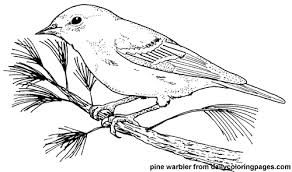 Texas Pine Warbler Bird Coloring Pages