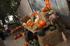 Bishop Pumpkin Farm Wedding by Fall In The Foothills