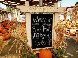 Nearest Pumpkin Patch Shop by Pumpkin Patch Picking Vacaville Ca