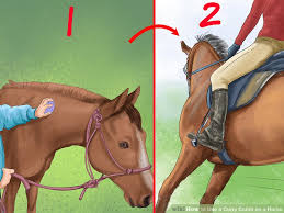 Rubber Horse Shedding Tool by How To Use A Curry Comb On A Horse With Pictures Wikihow