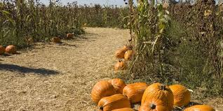 Pumpkin Patches Cincinnati Ohio Area by 17 Of The Most Incredible Ohio Corn Mazes To Get Lost In