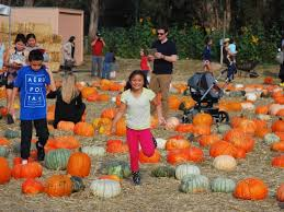 Pumpkin Patch Near Dixon Ca by Fall Fun Abounds At Napa Petaluma Pumpkin Patches Photoshow