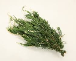Leyland Cypress Christmas Tree by Holiday Greens Gilded U0026 Frosted White Mist Wm F Puckett Inc