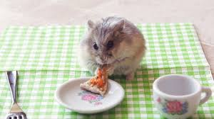Porcupine Eating Pumpkin Gif by 3030373 Poster P 1 Hamsters Eating Pizza Jpg 1280 720 Pizza