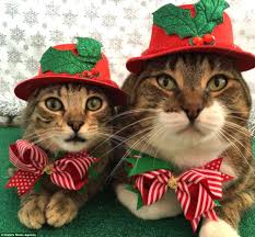 cats for dresses up cats for in festive onesies daily