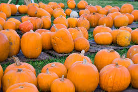 Best Pumpkin Patch Des Moines by Blog Sara Hopkins Realtor Des Moines