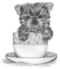 Artist Workshop How To Draw A Yorkie Puppy Step By Walter Wallpaper