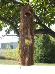 Suet Bird Feeders Woodpeckers Clingers and Jay Birds