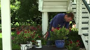 How To Transplant Mandevillas For Winter : Gardening Tips - YouTube 484 Best Gardening Ideas Images On Pinterest Garden Tips Best 25 Winter Greenhouse Ideas Vegetables Seed Saving Caleb Warnock 9781462113422 Amazoncom Books Small Patio Urban Backyard Slide Landscaping Designs Renaissance With Greenhouse Design Pafighting Fall Lawn Uamp Gardening The Year Round Harvest Trending Vegetable This Is What Buy Vegetables Fresh And Simple In Any Plants Home Ipirations