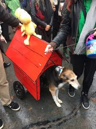 Tompkins Square Park Halloween Dog Parade 2017 by The Tompkins Square Halloween Dog Parade Was The Best Day Of My