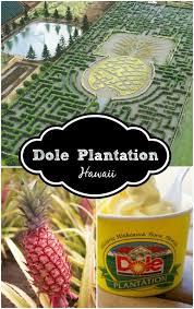 Best 25 Dole plantation hawaii ideas on Pinterest