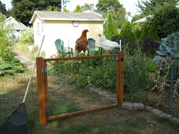 Keeping Chickens Out Of The Garden » Living In The Garden - 28 Best Keeping Chickens Warm Images On Pinterest 21 About Raising Chicken Pros And Cons Of Backyard 20 Winter Boredom Busters For Empty Plastic The Chick Quarantine When How Beginners Guide To Sustainable Baby Steps 908 Chickens Thking Raising Quail In Your Backyard Find Out How You Beckys Fresh Eggs Fun Pets In Your Cheap For Meat Find Things I Wish Had Known Before Getting 212