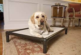 5 really indestructible dog beds the kong dog bed