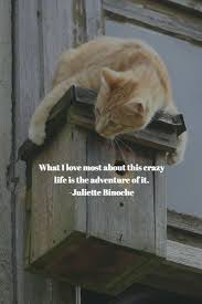 Sofa King We Todd Did Sayings by 9 Best Pawsome Quotes For Dog U0026 Cat Lovers Images On Pinterest