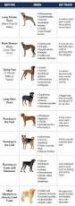 10 Dog Breeds That Shed The Most by Best 25 Vizsla Ideas On Pinterest Hungarian Vizsla Vizsla Dog