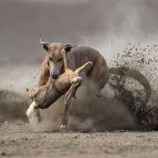 jagdtrieb abgewöhnen warum jagen hunde de