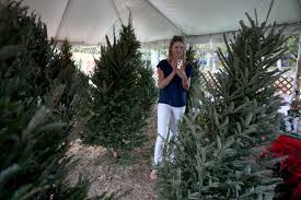 Tannenbaum Christmas Tree Farm Michigan by Pick Out Your Special Christmas Tree At Several Lansing Area Tree
