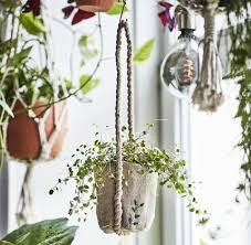die botanisk kollektion ikea feine dinge für pflanzen