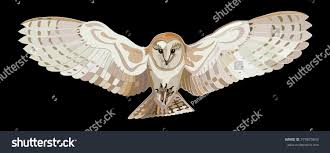 Flying Barn Owl Vector Image Stock Vector 379825843 - Shutterstock Barn Owl Tyto Alba 4 Months Old Flying Stock Photo Image Beauty Of Bird Our Barn Owl The Tea Rooms Chat Rspb Community A Flying At Folly Farm In Pembrokeshire West Wales Winter Spirit By Hontor On Deviantart Audubon Field Guide Vector 380339767 Shutterstock Wallpaper 12x800 Hunting A Royalty Free Tattoos Tattoo Ideas Proyectos Que Debo Ientar