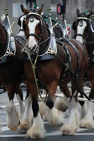 Budweiser Clydesdales - Wikipedia Bud Light Beer Stock Photos Images Alamy Best Ford Commercial Ever Youtube Ten Reasons You Gotta Go To A Monster Truck Show What Are You Waiting For Time Machine Wilson Cos Clyddales The Gazette Shop Little Tikes Cozy Free Shipping Today Overstockcom Carlton United Breweries Cub An Onic Beer Company With Toby Keith Brings Ford Trucks Red Solo Cups To Phoenix Porter County Fair Fords Newest F150 Is A Badass Police Drive Your Definitive 196772 Chevrolet Ck Pickup Buyers Guide X Marks Class We Drive Mercedes New X250 Diesel Ute Reviews Driven
