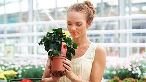 pflanzen kaufen so erkennen sie gesunde pflanzen im