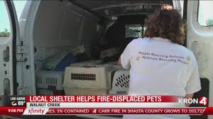 Bay Area Shelter Steps Up To Help Animal Rescue Displaced By Carr Fire Finally Got To Finish My Carr Hoop Steps Today 2 Full Time Jobs Running Boards Nerf Bars We Make It Easy Jeep Wrangler Ld Side Steps Black 9706 Tj Ford Transit 2013 Xp3 Factory Obs Fseries Step Install Youtube Light Wing Buff Truck Outfitters Carr 103991 Hoop Ii Ebay And Simpson Toolbox Cheap Find Deals On Line At Super Dodge Diesel Resource Forums