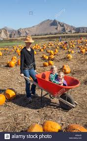 Pumpkin Patch North Bend Oregon by Three Sisters Agriculture Stock Photos U0026 Three Sisters Agriculture
