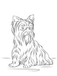 Yorkshire Terrier Coloring Page From Dogs Category Select 27278 Printable Crafts Of Cartoons Nature Animals Bible And Many More