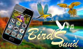 Latest Bird Ringtones 2018 APK डाउनलोड - एंडरॉयड के ... Dame Tu Cosita Songs Ringtones For Android Apk Download Bbc Autos The Weird Tale Behind Ice Cream Jingles Good Humor Ice Cream Novelties Treats Truck Song Polyphonic Youtube Trap Remix By Lyf3st1le Smg Media Videos Truck Ringtone Mp3 Html Amazing Wallpaper Amazoncom Flute Appstore Recall That We Have Unpleasant News For You Funny South African Closetoyou Hashtag On Twitter