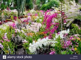 Orchids at Moir Gardens Klahuna Plantation Resort Kauai Hawaii