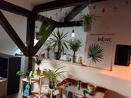 ist dieser platz zu dunkel für meine pflanzen beleuchtung