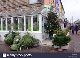 Christmas Trees Types Uk by London Uk 23rd Dec 2016 With 2 Days To Christmas Trees Are