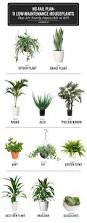 Plants For The Bathroom Feng Shui by 11 Easy To Grow Houseplants Houseplant Houseplants And To Grow