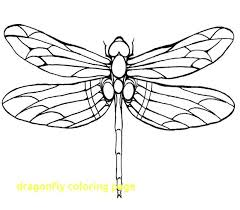 Dragonfly Coloring Page Sheets With Within Pages