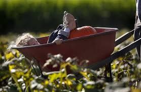 Petaluma Pumpkin Patch Corn Maze Map by Harvest And Halloween Fun In Petaluma And Sonoma