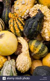 Varieties Of Pumpkins by Gallery Of Types Of Squash For On Home Design Ideas With Hd