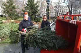 Seattle Christmas Tree Disposal 2015 by Recycle Your Christmas Tree At Mulchfest 2017 Inhabitat Green