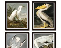 Vintage Audubon Sea Birds Print Set No 5 Giclee Bird Prints