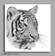 tigerunframed