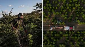klimawandel schä sie sich für ihren weihnachtsbaum