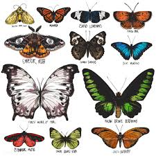 Illustration drawing style of butterfly collection free image by