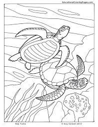 Pin Drawn Sea Turtle Ocean Animal 5