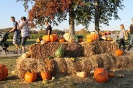 Pumpkin Picking Nj Near Staten Island by The Offmetro Guide To Fall Foliage Near Nyc Offmetro Ny