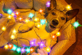 Are Christmas Tree Needles Toxic To Dogs by Safety Tips For Every Season Winter